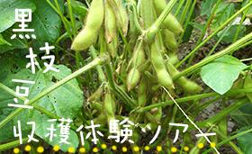 黒枝豆収穫体験ツアー