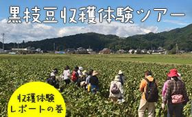 黒枝豆収穫体験ツアーレポートの巻