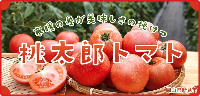 桃太郎 トマト 栽培