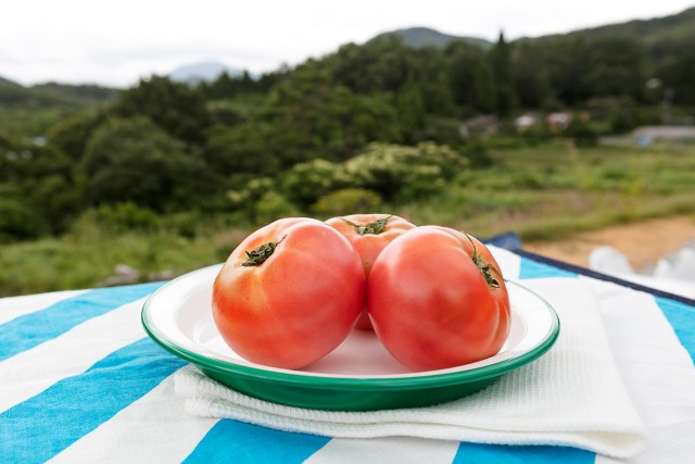 仲良し夫婦の愛情たっぷり!岡山県新見市「桃太郎トマト」